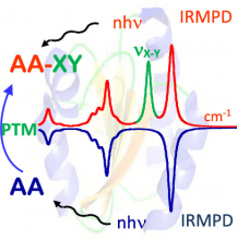 Applications of Infrared Multiple Photon Dissociation (IRMPD) to the Detection of Posttranslational Modifications